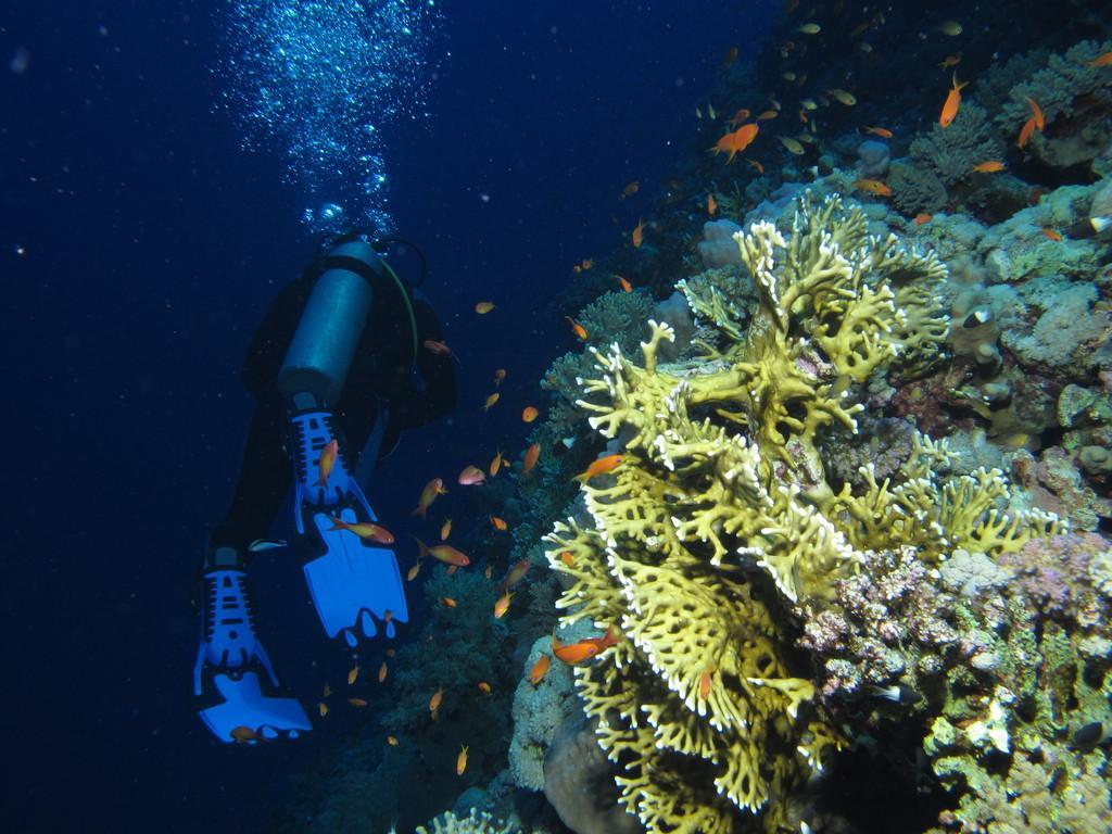 Daedalus Reef