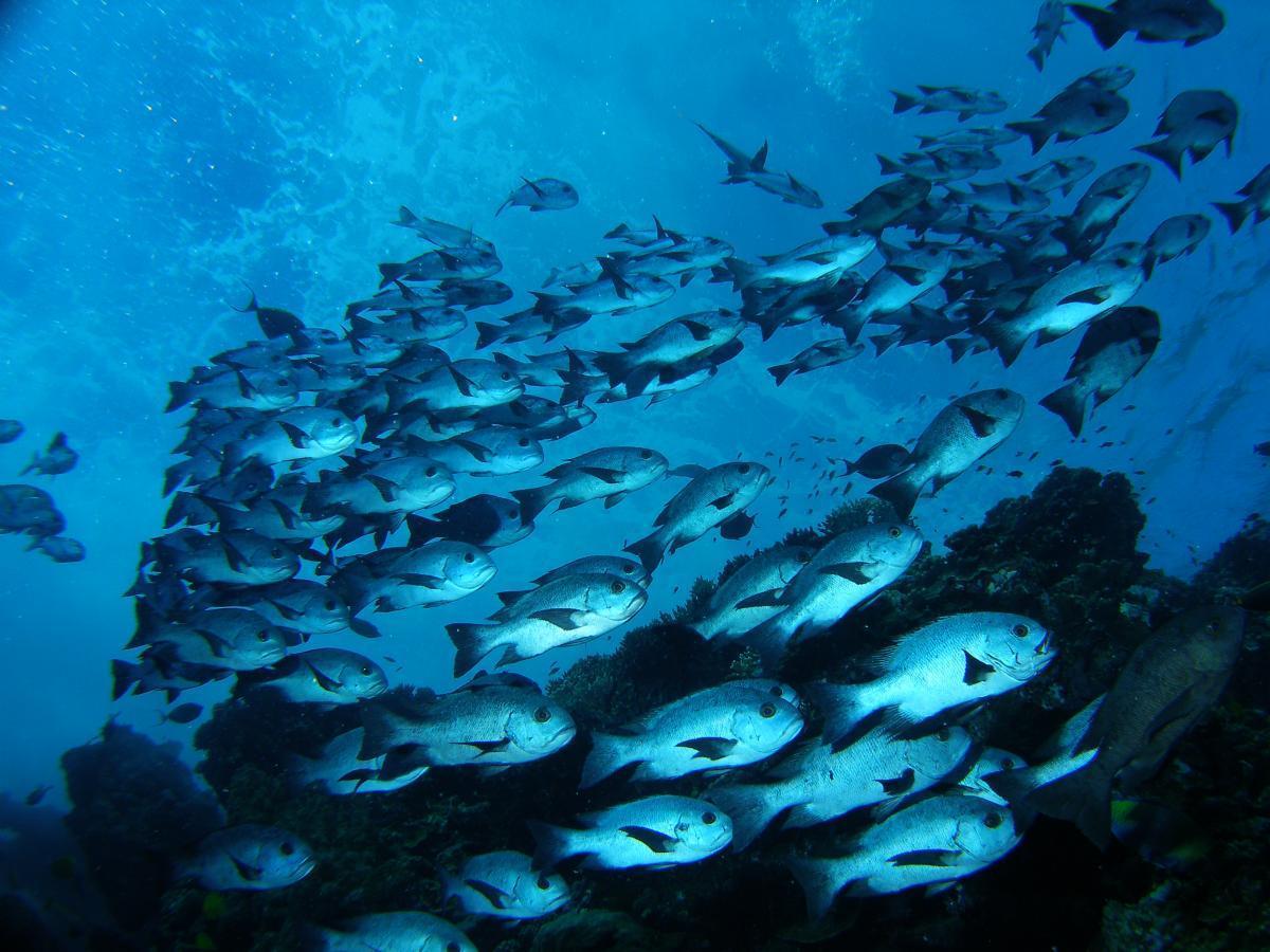 Podwodne Morze Czerwone