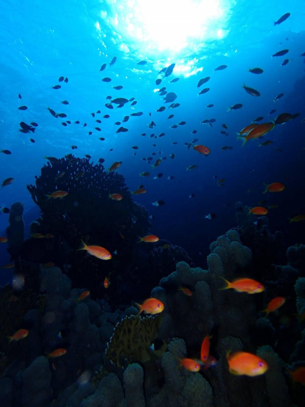rafa koralowa w Egipcie