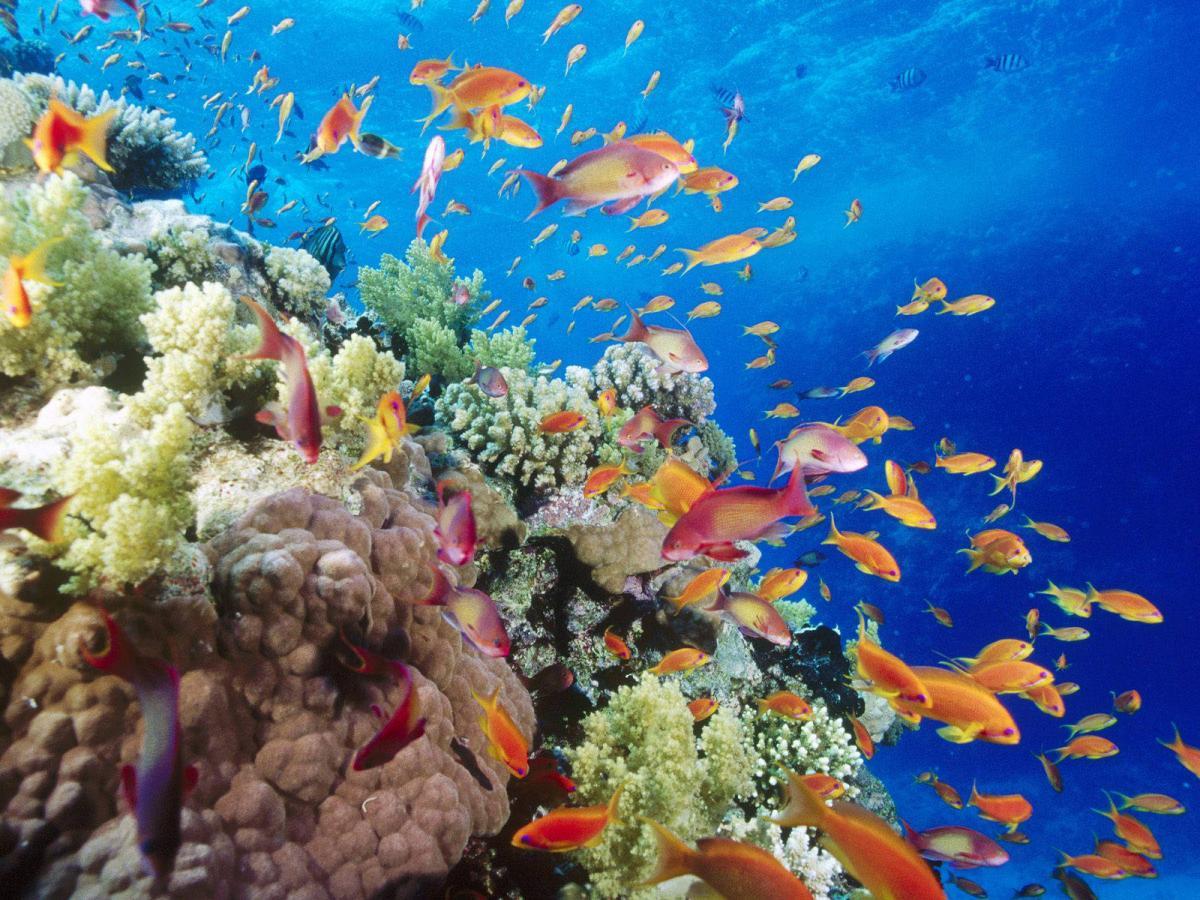 Dangerous Reef