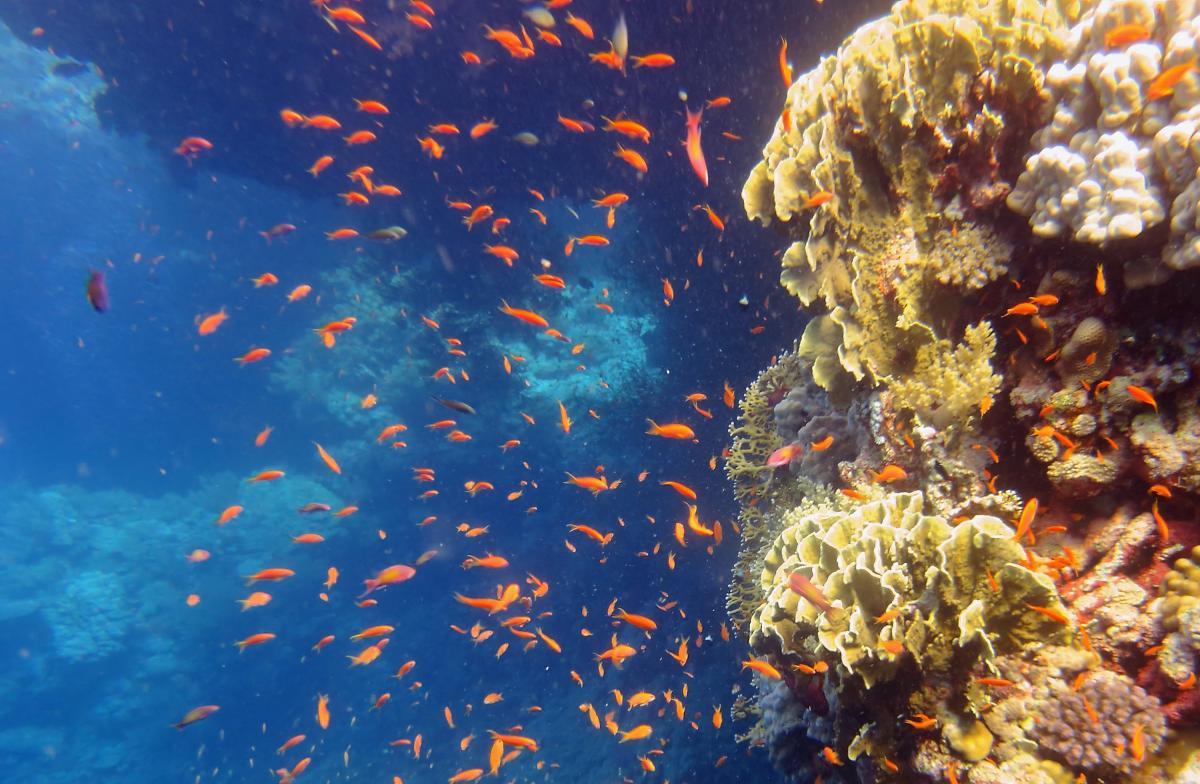 Safari na Morzu Czerwonym